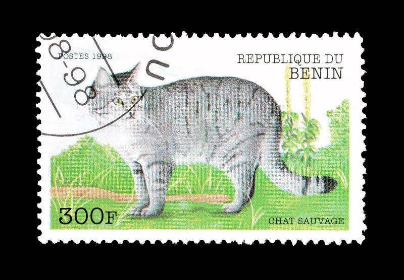 Dziki kot na znaczku pocztowym obrazy stock