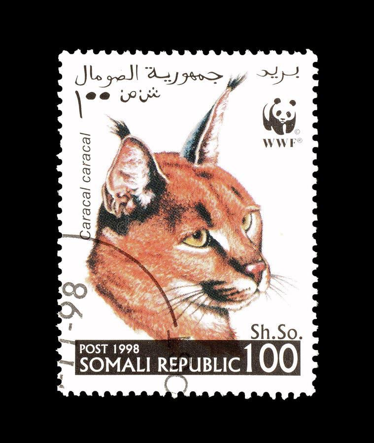 Dziki kot na znaczku pocztowym zdjęcie royalty free