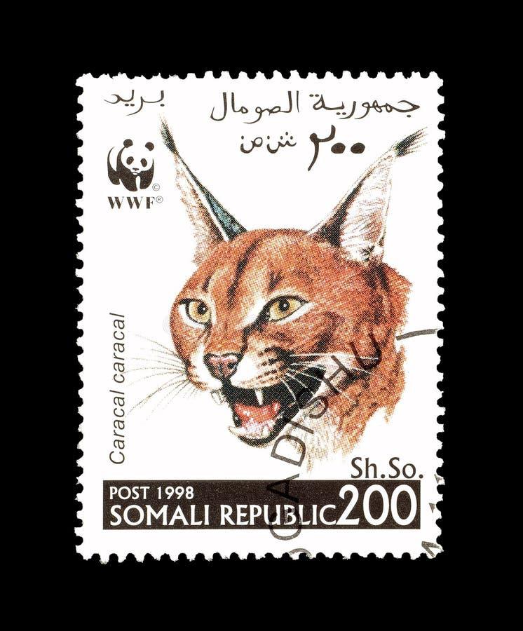 Dziki kot na znaczku pocztowym obrazy royalty free