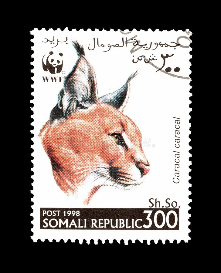 Dziki kot na znaczku pocztowym obraz royalty free