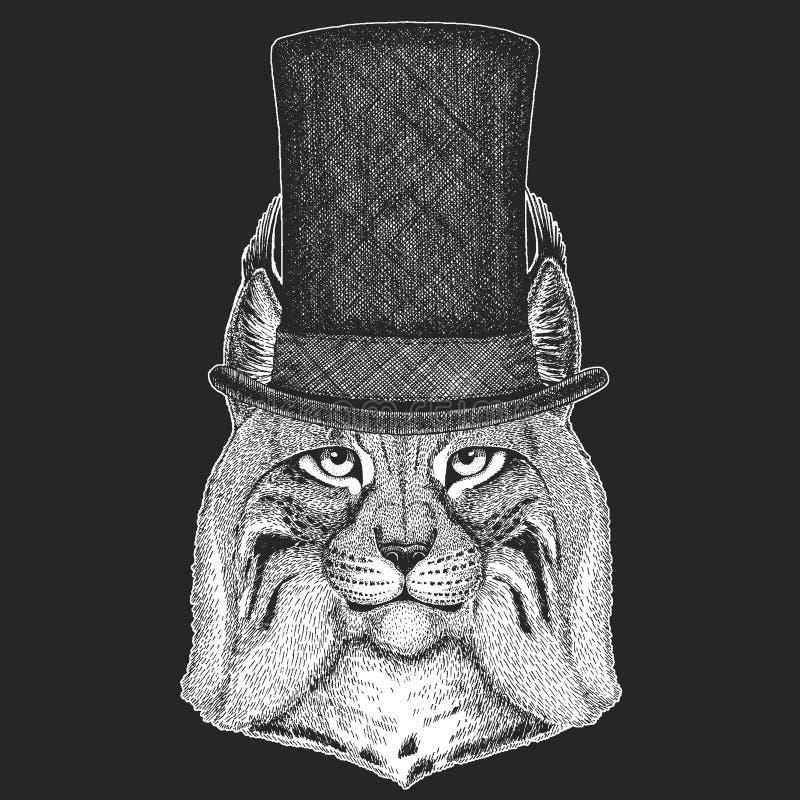 Dziki kot, ryś, ryś rudy, bryk ręki Odgórny kapelusz, butla Modnisia zwierzę, dżentelmen Klasyczny pióropusz Drukuje dla dzieci t ilustracji