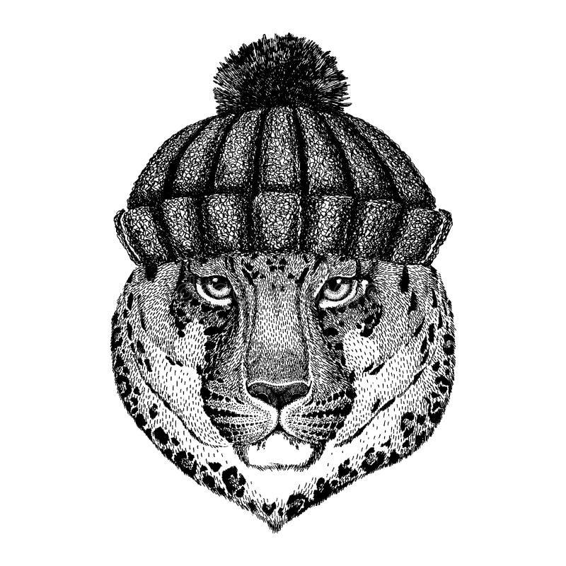 Dziki kota lamparta kota ` - halnej pantery Chłodno zwierzę jest ubranym trykotowego zima kapelusz Ciepła pióropuszu beanie bożyc ilustracji