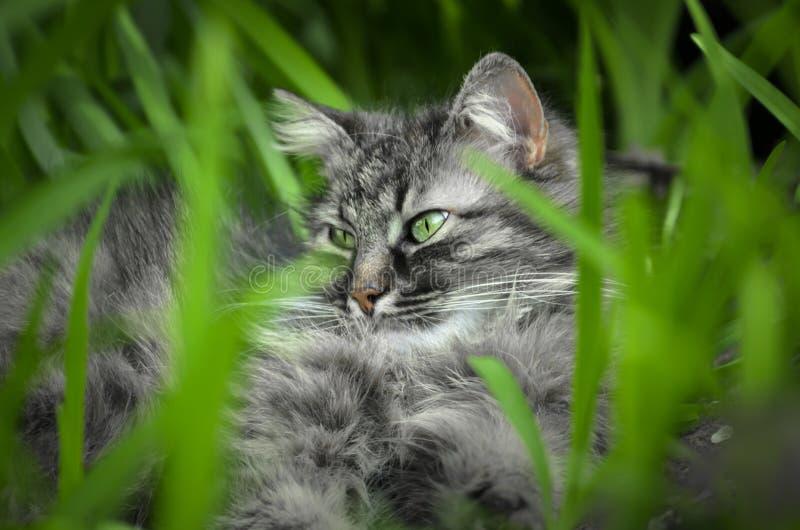 Dziki kota lying on the beach wśród zieleni z zielonymi oczami obraz stock
