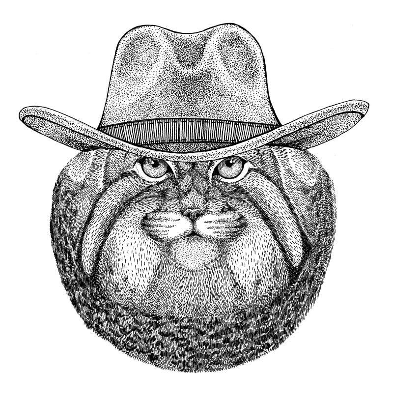 Dziki kota Manul dzikie zwierzę jest ubranym kowbojski kapelusz Dziką zachodnią zwierzęcą Kowbojską zwierzęcą koszulkę, plakat, s ilustracja wektor