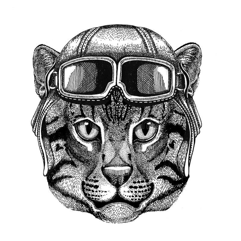 Dziki kota połowu kot jest ubranym rzemiennego hełma lotnika, rowerzysta, motocykl ręka rysująca ilustracja dla tatuażu, emblemat ilustracja wektor