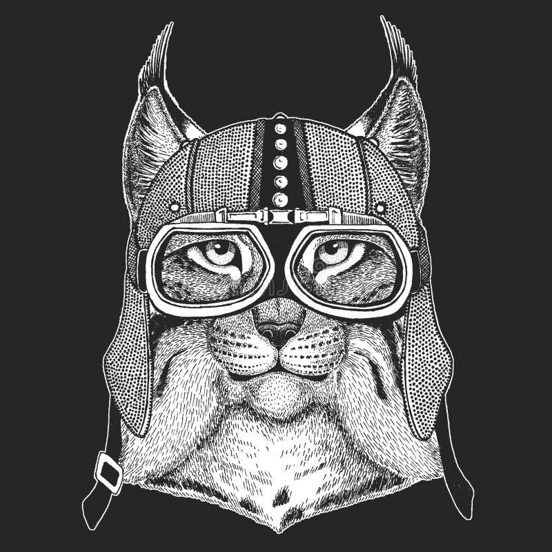 Dziki kota rysia rysia rudy bryka rocznika motocyklu hemlet Retro stylowa ilustracja z zwierzęcym rowerzystą dla dzieci, dzieciak ilustracji