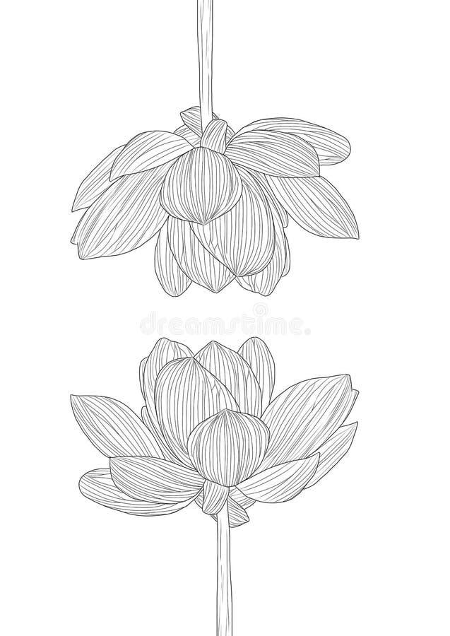 Dziki kwiatów rysować, nakreślenie z sztuką i royalty ilustracja