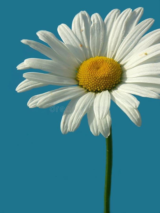 Download Dziki kwiat obraz stock. Obraz złożonej z niebo, badyl - 138401