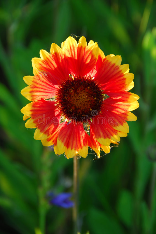 dziki kwiat zdjęcie royalty free