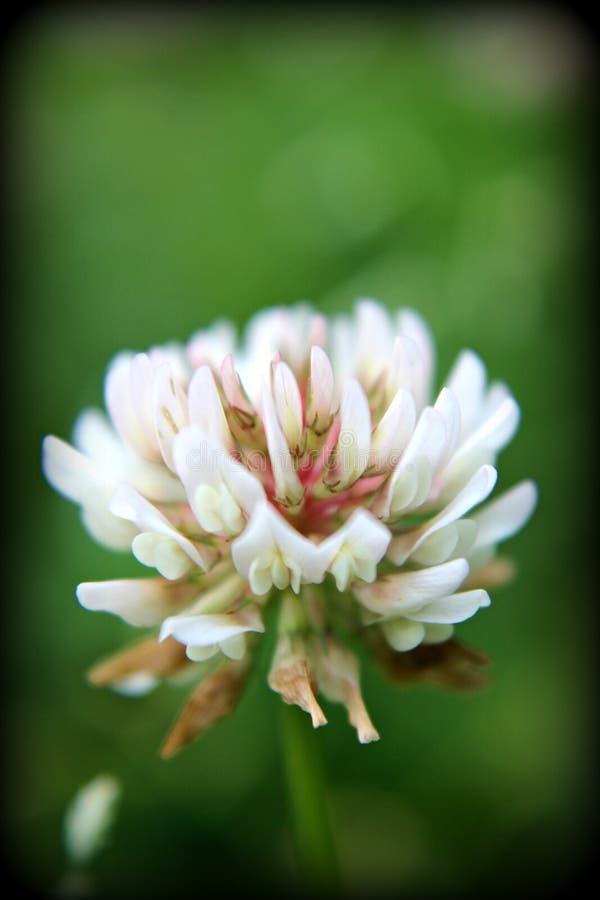 dziki kwiat obrazy stock