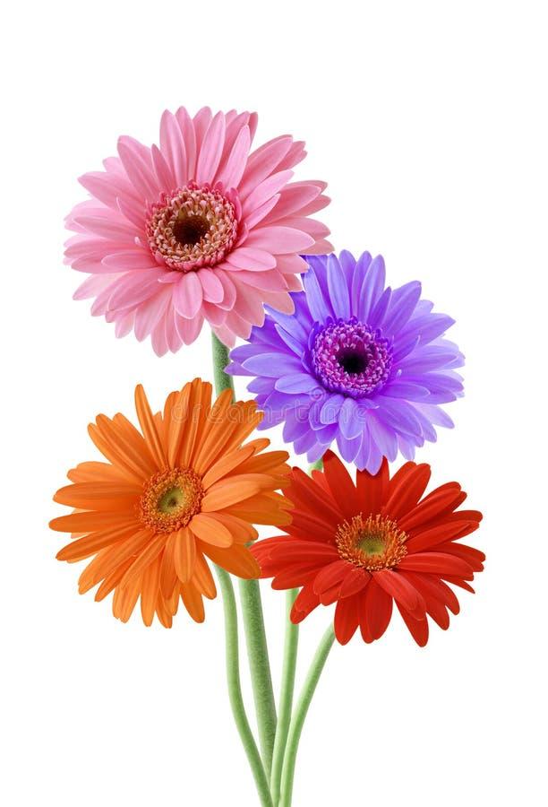 dziki kwiat obraz stock