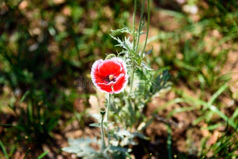 dziki kwiat obrazy royalty free