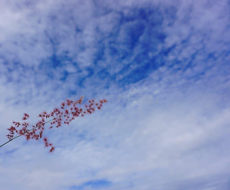 Dziki kwiat i niebo zdjęcie royalty free