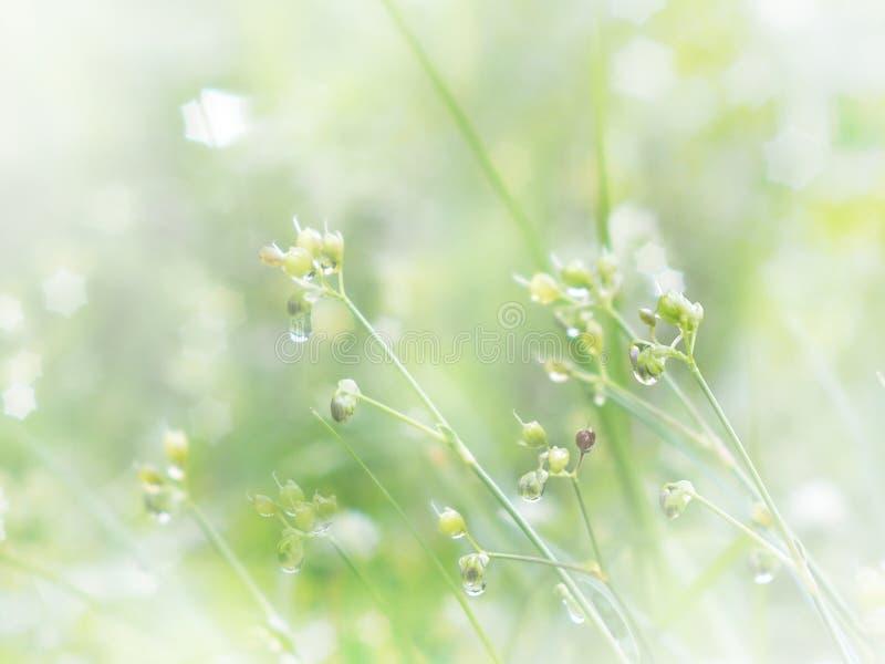 Dziki kwiat i trawa z wodą opuszczamy w ranku Wiosna i obrazy royalty free