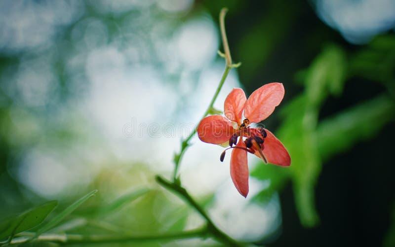 Dziki kwiat w pełnym okwitnięciu obrazy royalty free