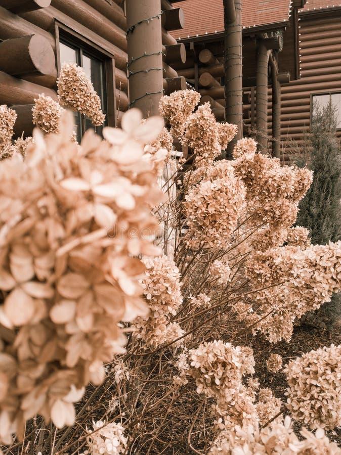 Dziki kwiat z kabinami obraz royalty free