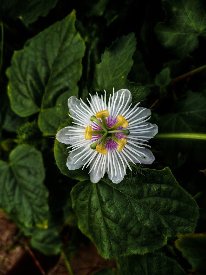 Dziki kwiat znajdujący w lesie zdjęcie royalty free