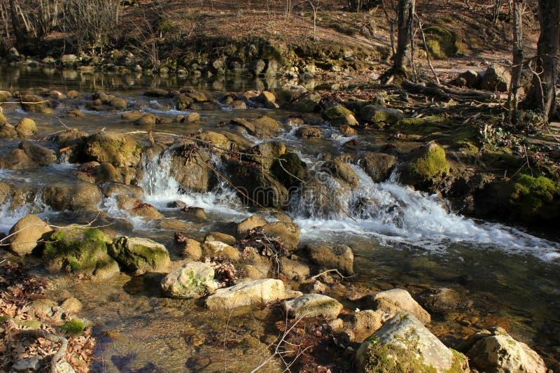 Dziki las, gąszcze, lasowy jezioro i rzeka, fotografia royalty free