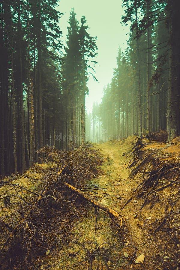 Dziki las okrywający w mgle obrazy royalty free