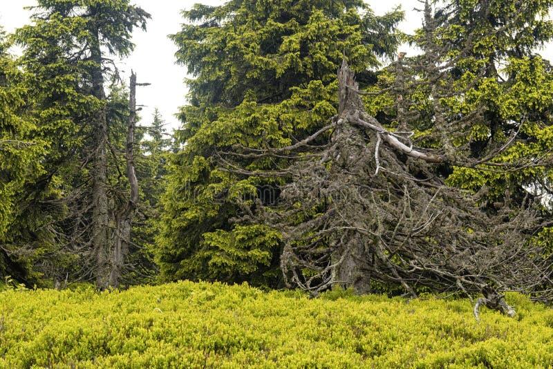 Dziki las w górach fotografia royalty free