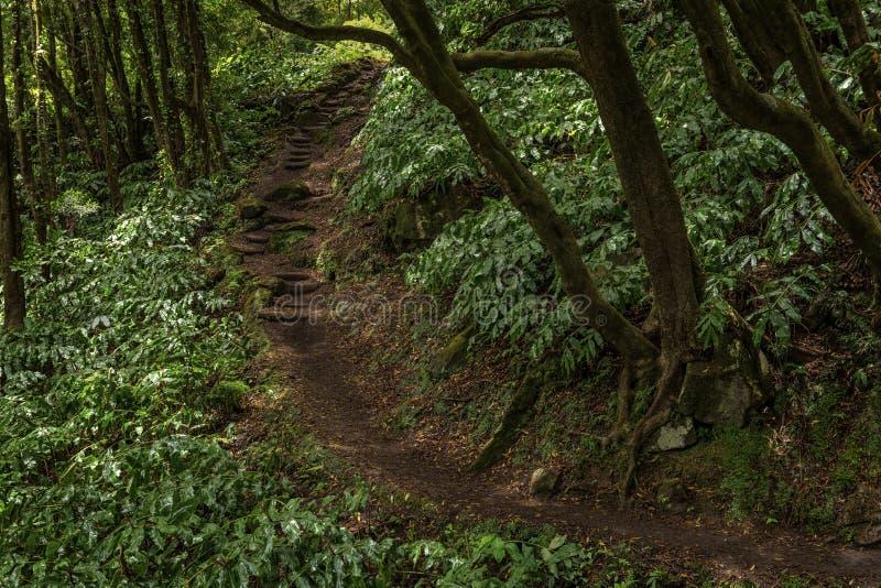 Dziki las ze ścieżką obrazy royalty free