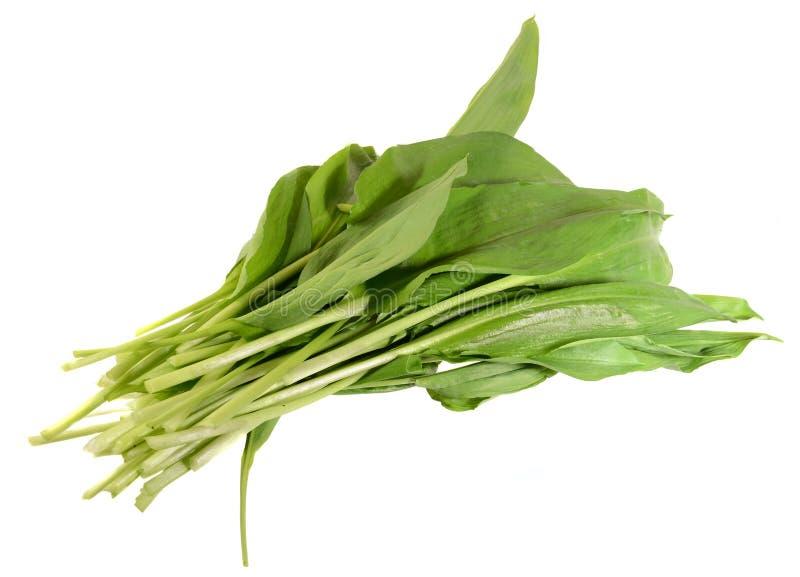 Dziki leek, Allium ursinum †'znać jako ramsons fotografia royalty free