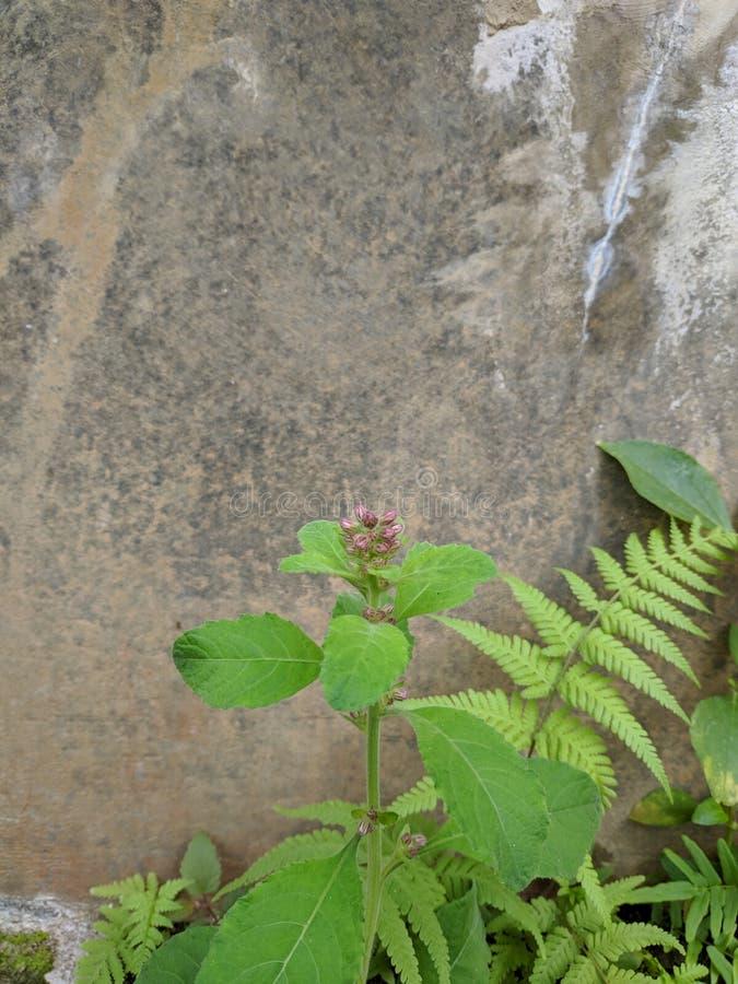 Dziki mały rośliny dorośnięcie na betonowej ścianie obraz stock