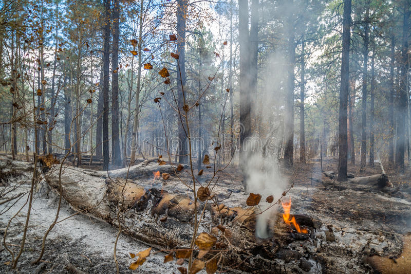 Dziki ogień w Arizona fotografia royalty free