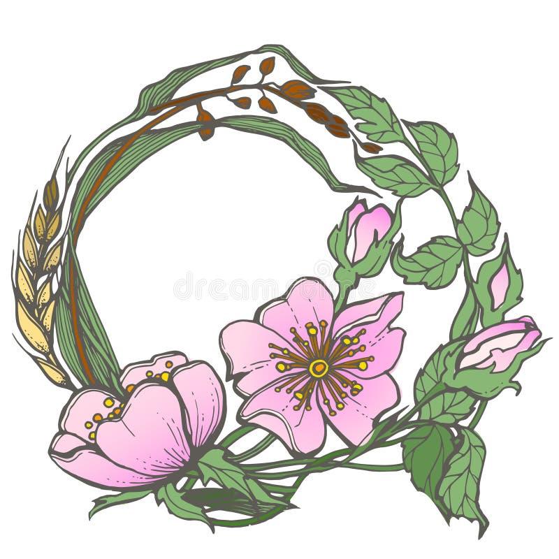 Dziki pies wzrastał kwiat ramy konturu atramentu kolorystyki dorosłej strony rysunkowego wektorowego clipart na białym tle royalty ilustracja
