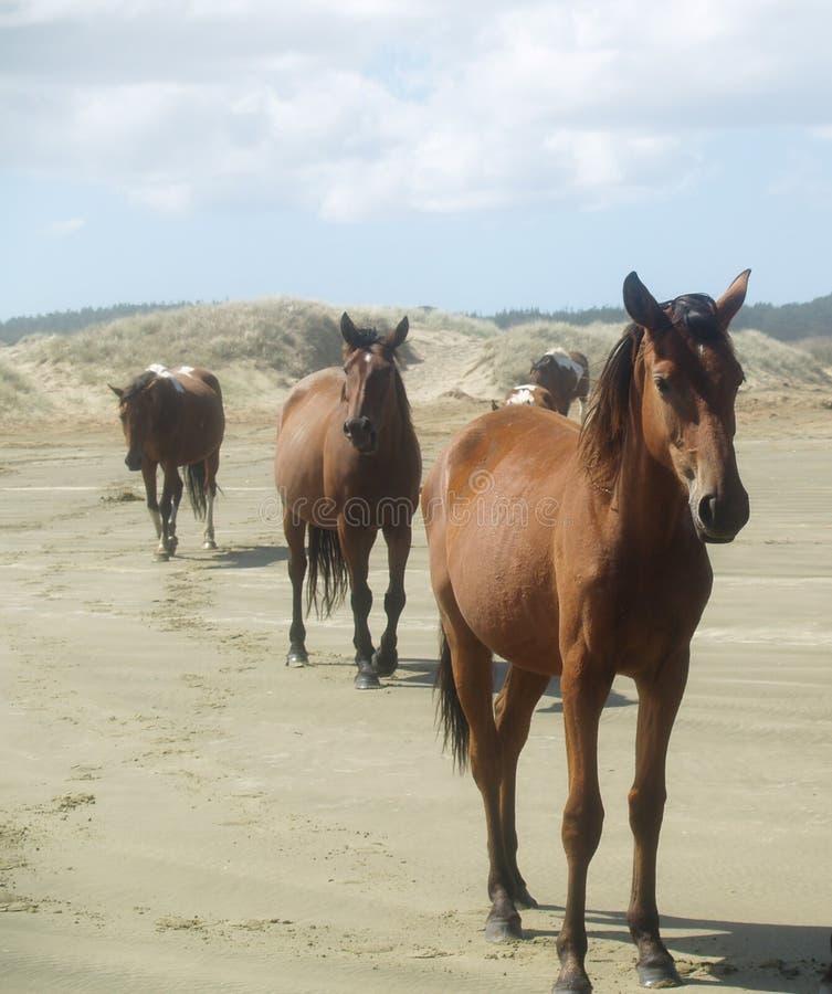 dziki słuchający koń obraz stock