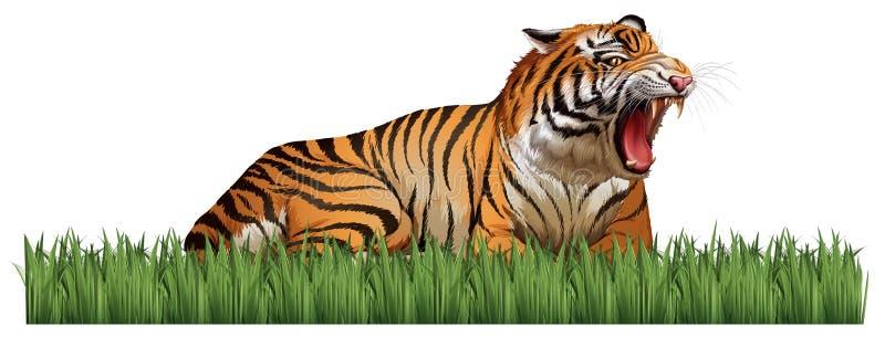 Dziki tygrys ryczy w polu royalty ilustracja