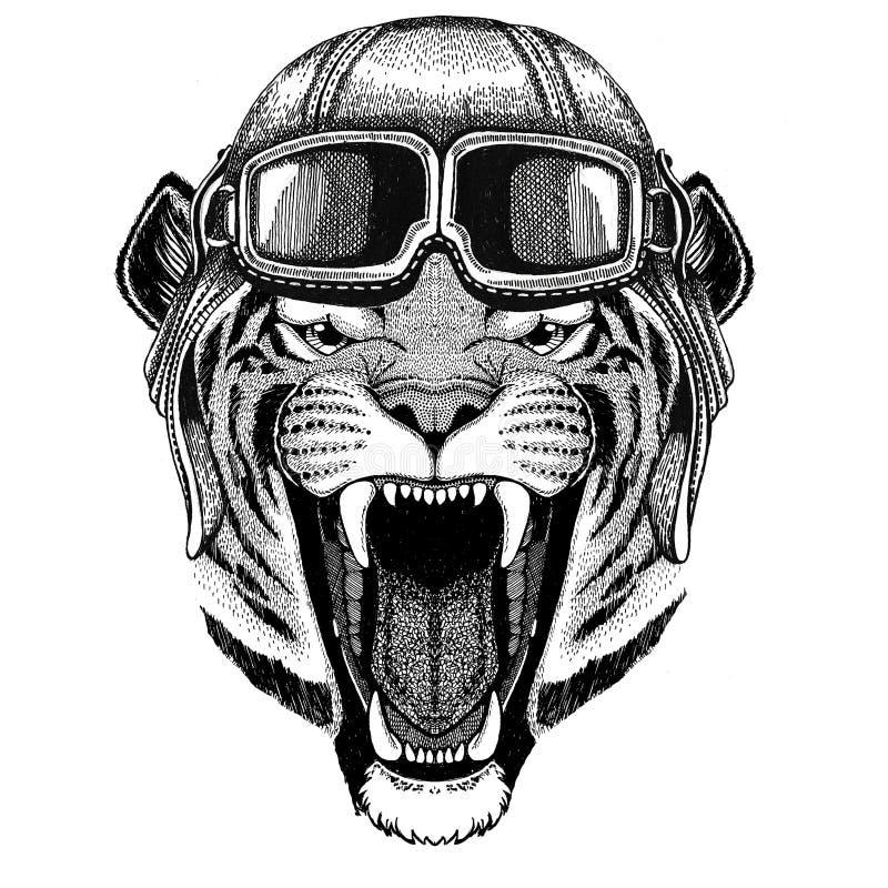Dziki tygrysi lotnik, rowerzysta, motocykl ręka rysująca ilustracja dla tatuażu, emblemat, odznaka, logo, łata royalty ilustracja