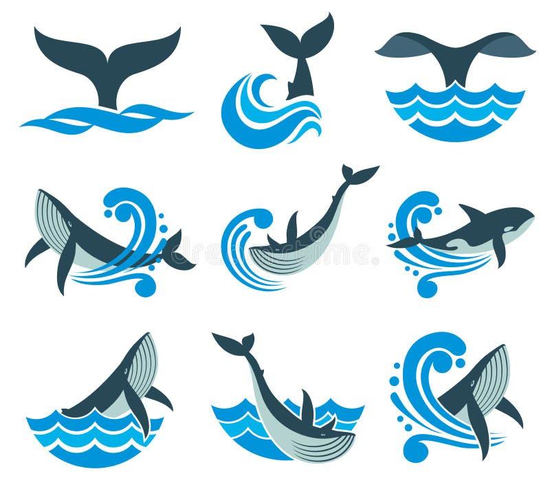 Dziki wieloryb w morze wodzie i fala bryzga wektorowe ikony ilustracji