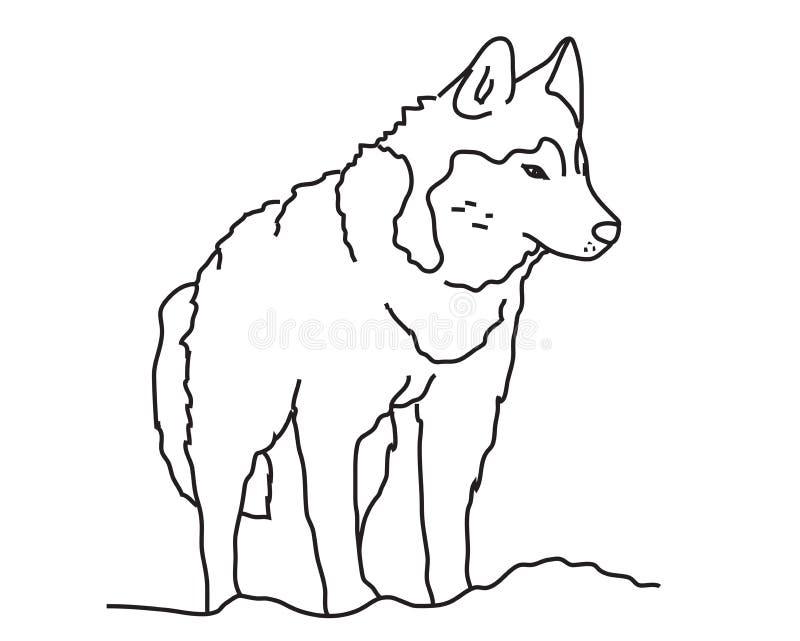 Dziki wilk na białym tle sylwetka ilustracja wektor