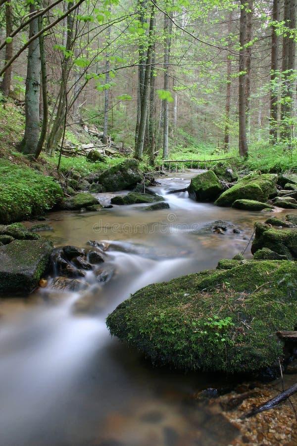 dziki wody obrazy stock
