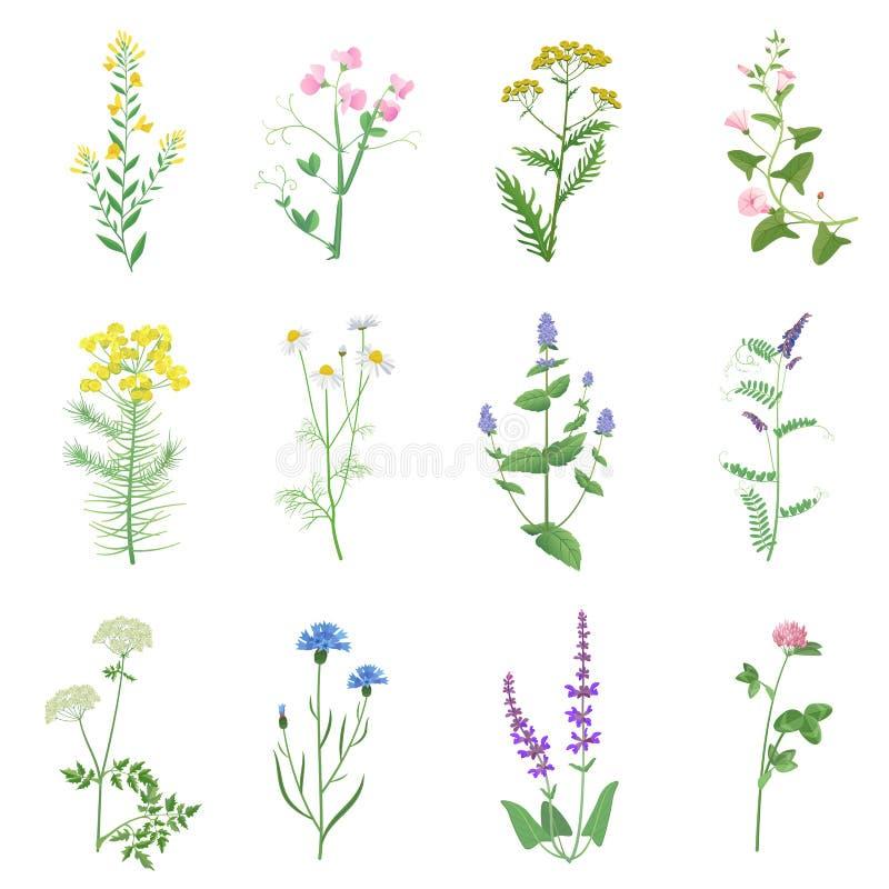Dziki ziele kolor ustawiający odizolowywającym Wildflowers, ziele, liście Ogrodowy i dziki ulistnienie, kwiaty, rozgałęzia się we ilustracji