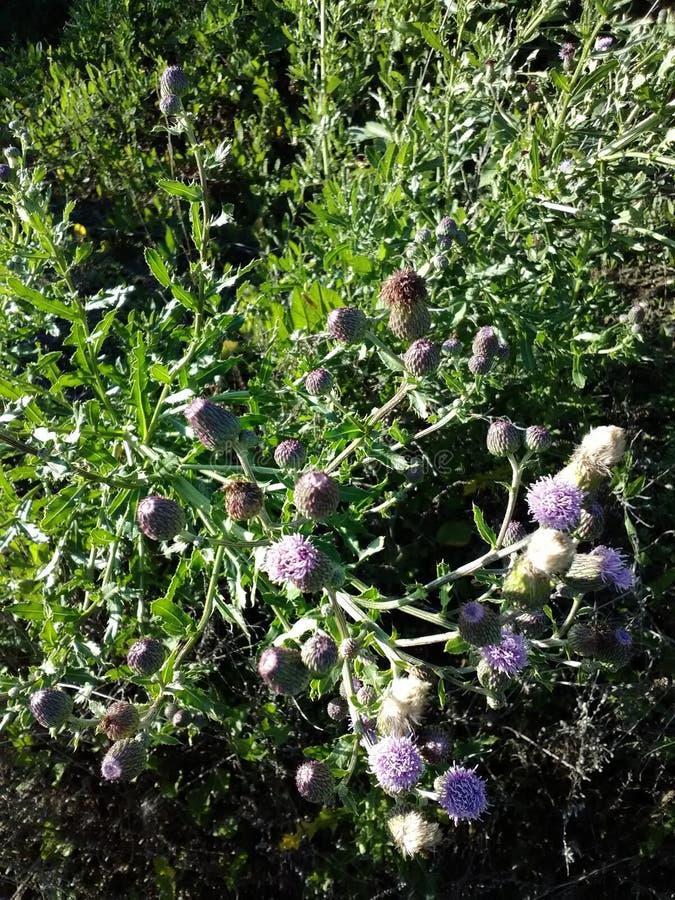 Dzikich kwiatów odludzie zdjęcie royalty free