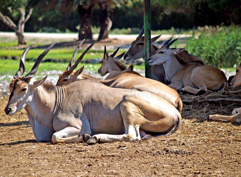 dzikich zwierząt obraz stock
