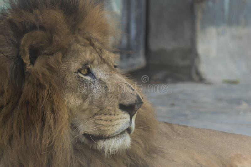 dzikich zwierząt zdjęcia royalty free