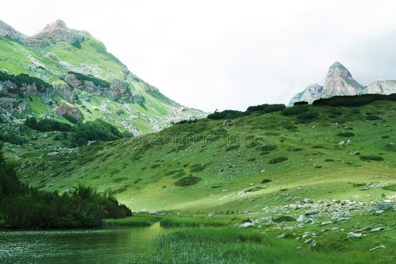 dzikie góry zdjęcia royalty free