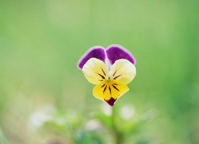 dzikie kwiaty obraz stock