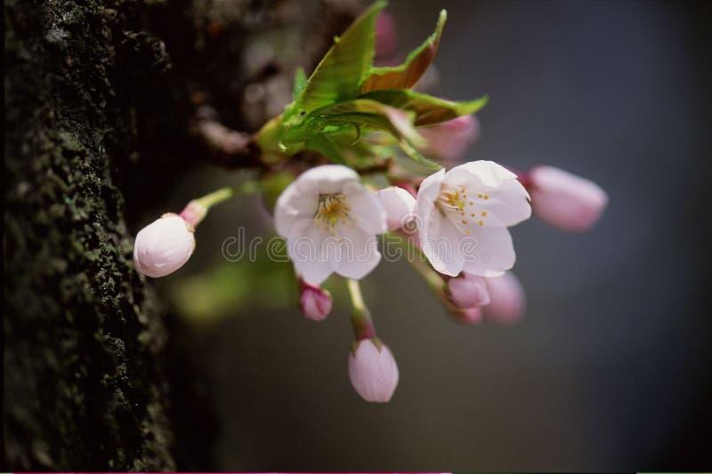 dzikie kwiaty fotografia royalty free