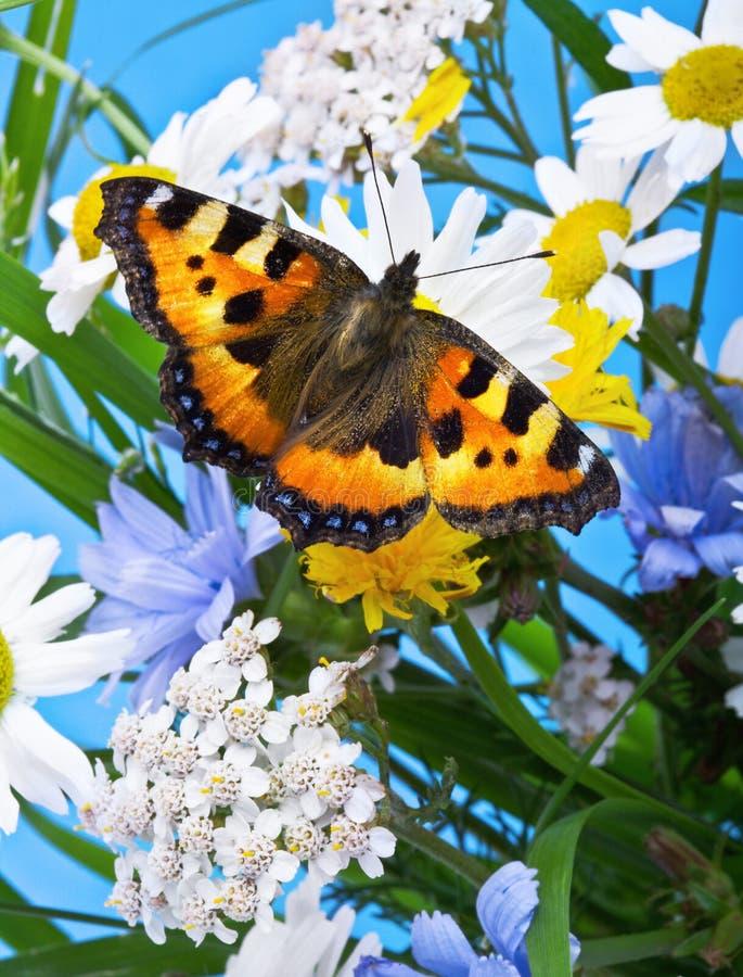 dzikie kwiaty motyla zdjęcie royalty free