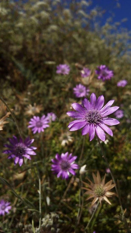 dzikie kwiaty zdjęcie stock