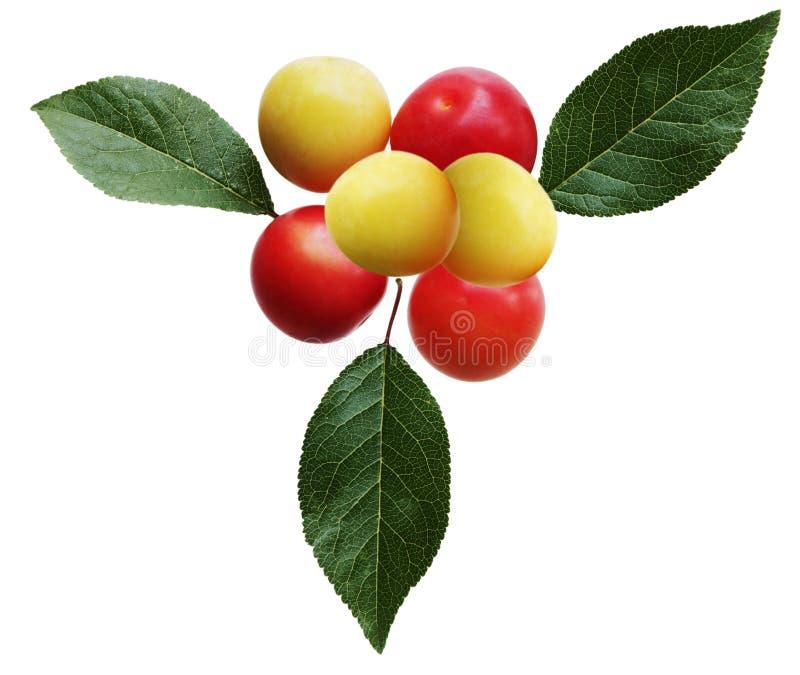 dzikie owoce jagodowa fotografia stock