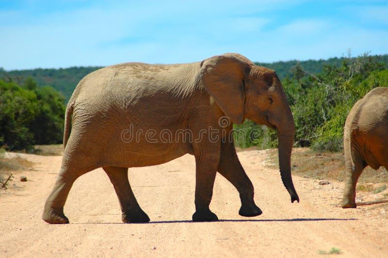 dzikie zwierzę obrazy stock