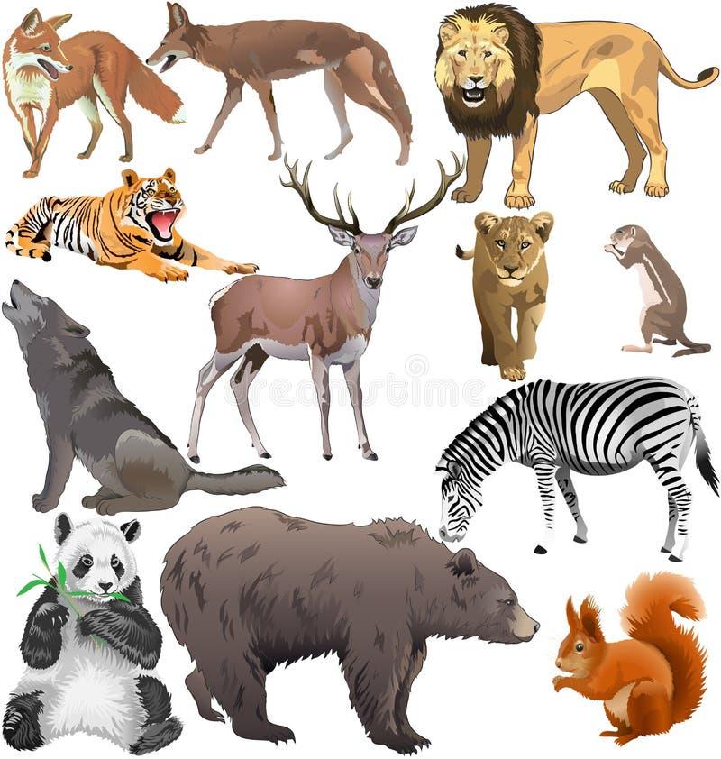 Dzikie zwierzęta ilustracji