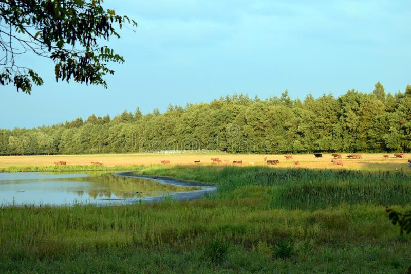Dzikie zwierzęta w lesie fotografia royalty free