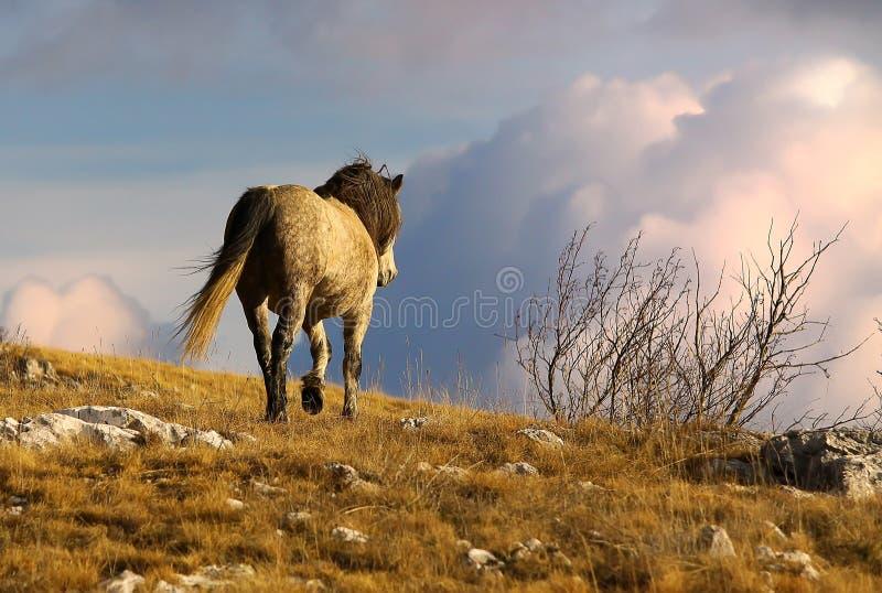 Dzikiego konia odprowadzenie w górach fotografia royalty free