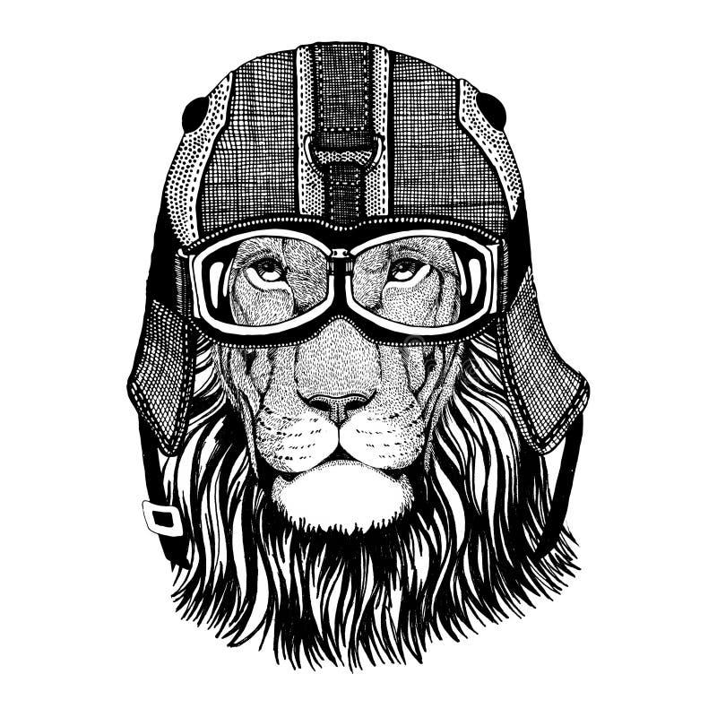 Dzikiego kota Dziki lew w motocyklu hełmie z szkłami ilustracji